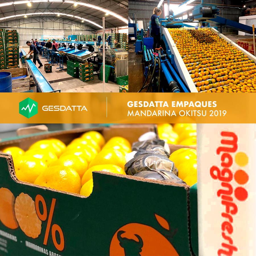 Sistema de Empaque de Frutas: Estuvimos en la empresa Magnifresh S.A